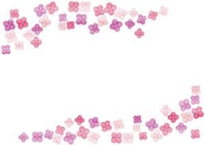 あじさい ピンク色 水彩 背景 イラスト 無料