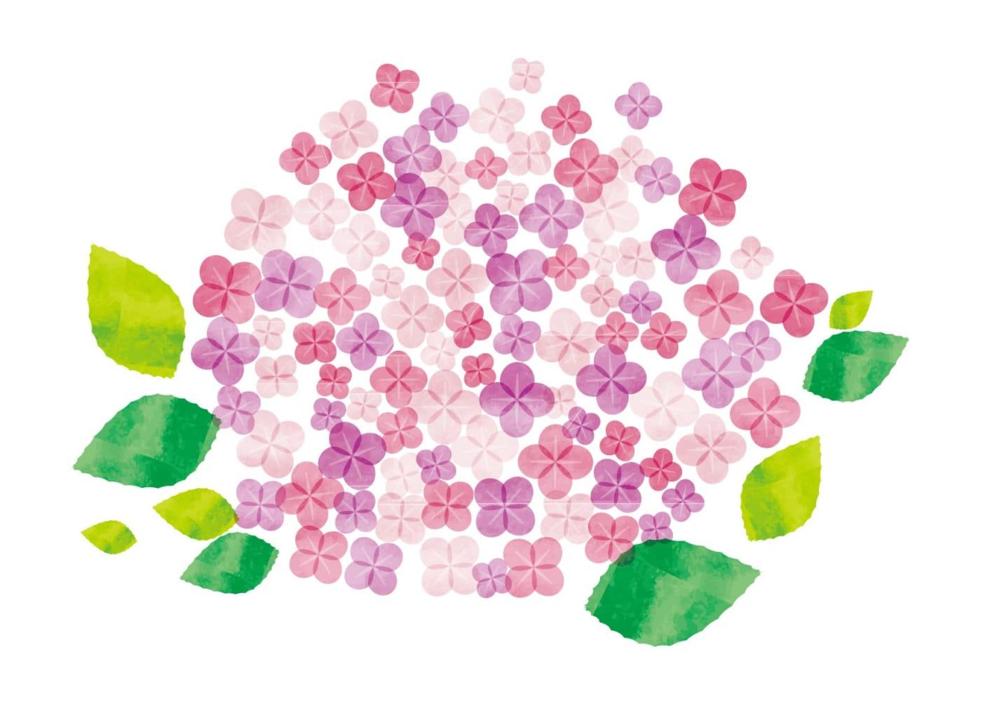 あじさい 水彩 ピンク色 花 イラスト 無料
