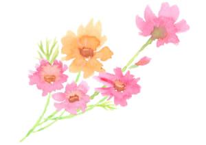 水彩 コスモス 花 束 イラスト 無料
