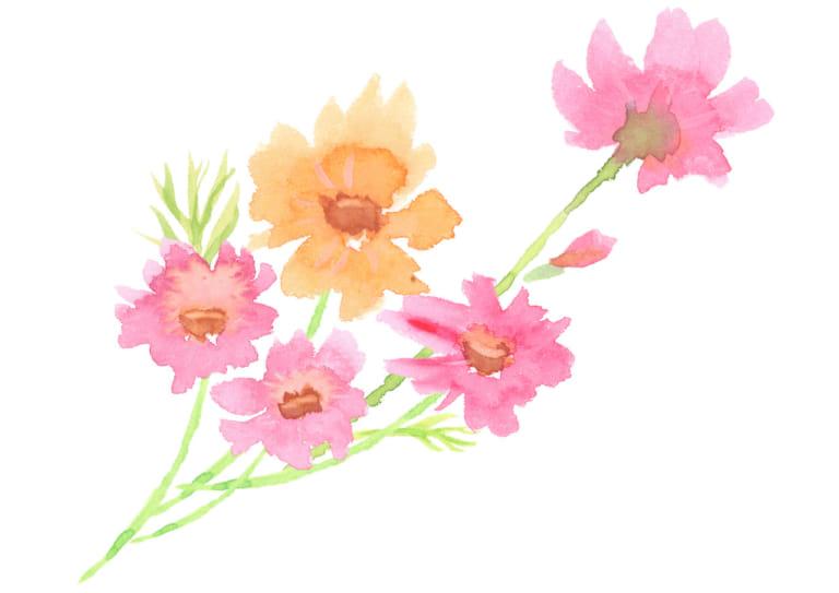 水彩 コスモス 花 束 イラスト 無料 無料イラストのイラスト