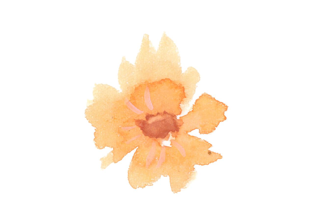 可愛いイラスト|水彩 コスモス 花 オレンジ色