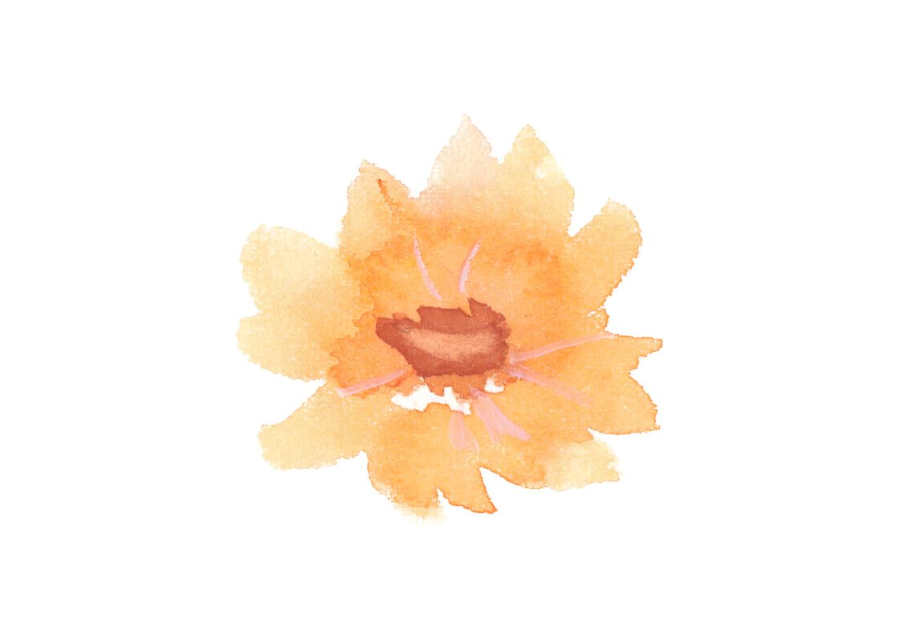 可愛いイラスト無料|水彩 コスモス 花 オレンジ色2