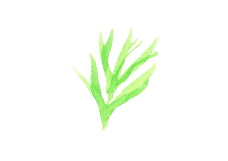 水彩 コスモスの葉 イラスト 無料