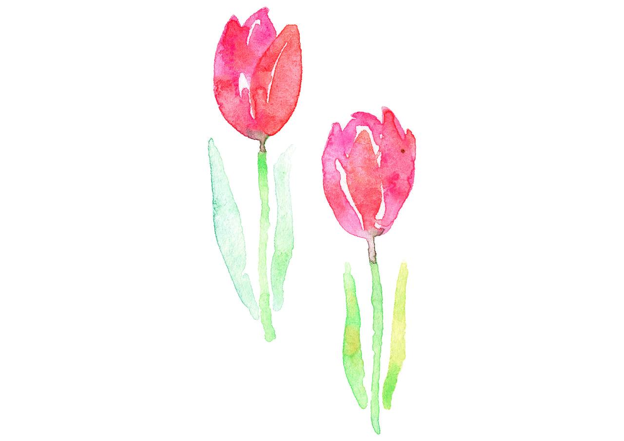 可愛いイラスト無料|水彩 チューリップ 花