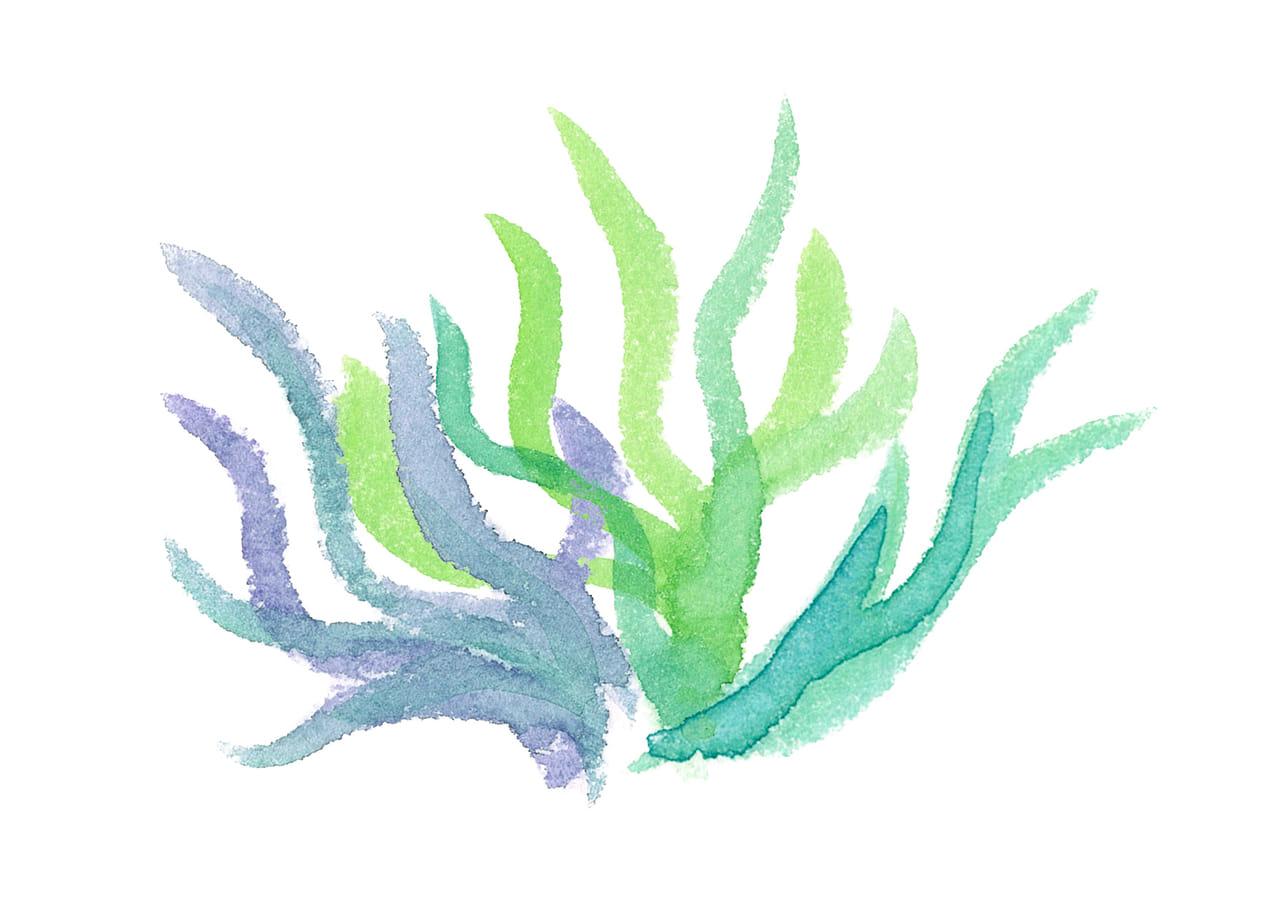 手書きイラスト無料|水彩 エアプランツ ポイント