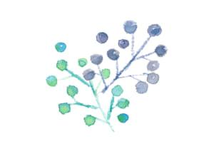 水彩 木の実 ポイント イラスト 無料
