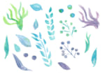 水彩 葉っぱ エアープランツ 果実 イラスト 無料