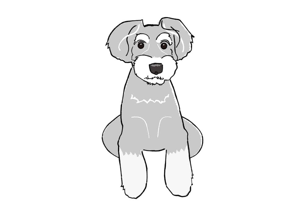 おしゃれなイラスト|手書き おすわり 犬 ミニチュアシュナウザー