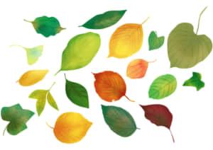 手書き 様々な葉っぱ 秋 夏 イラスト 無料
