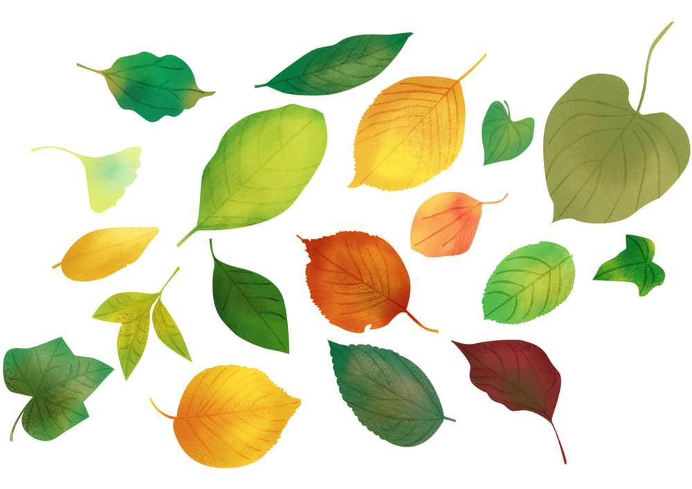 おしゃれなイラスト|手書き 様々な葉っぱ 秋 夏