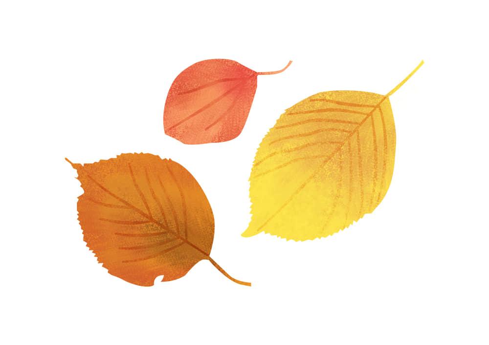 おしゃれなイラスト|手書き 様々な葉っぱ 秋 赤色