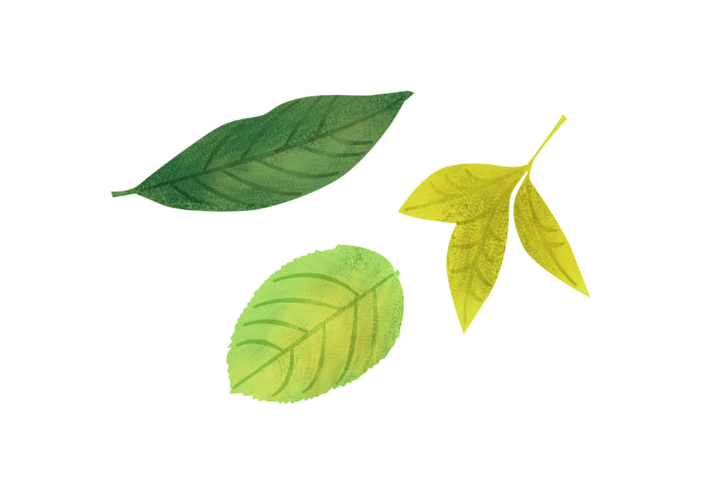 おしゃれなイラスト無料|手書き 様々な葉っぱ 夏 緑色
