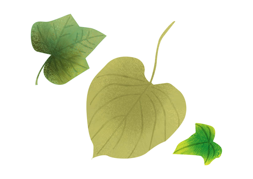 手書きイラスト無料|手書き 様々な葉っぱ 夏 緑色2
