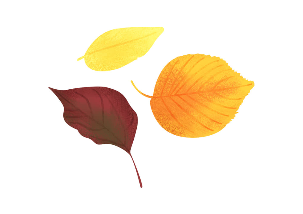 手書きイラスト無料|手書き 様々な葉っぱ 秋 赤色2