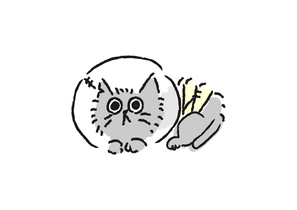可愛いイラスト|背景 TNR 猫 手術