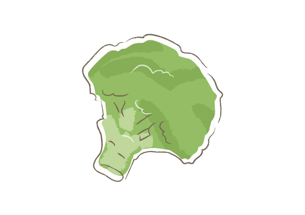 可愛いイラスト無料|野菜 ブロッコリー