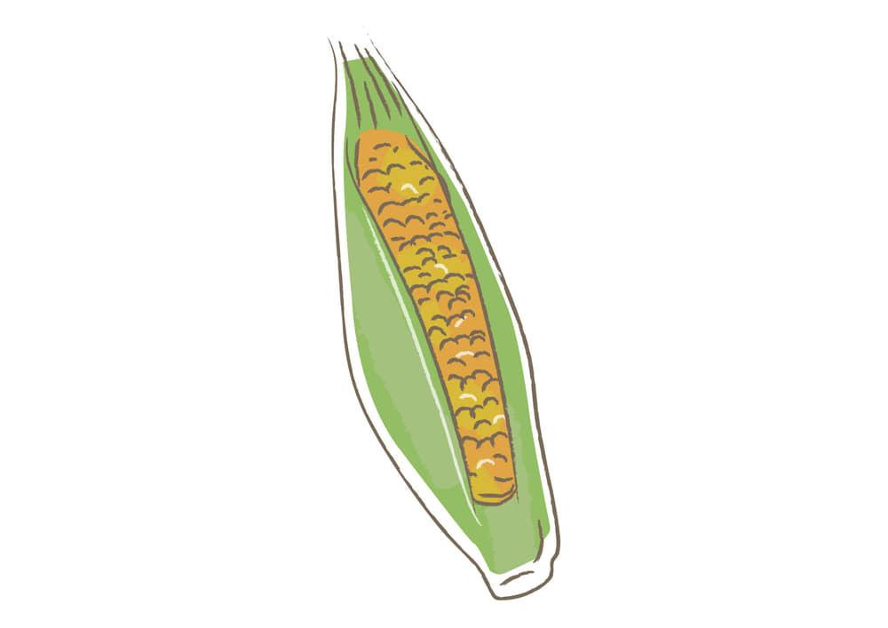 可愛いイラスト無料|野菜 トウモロコシ