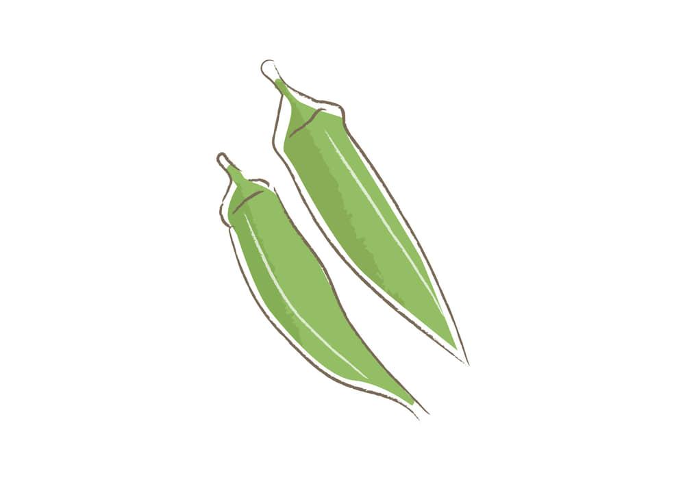 可愛いイラスト無料|野菜 オクラ