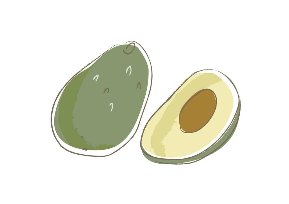 可愛いイラスト無料|野菜 アボカド