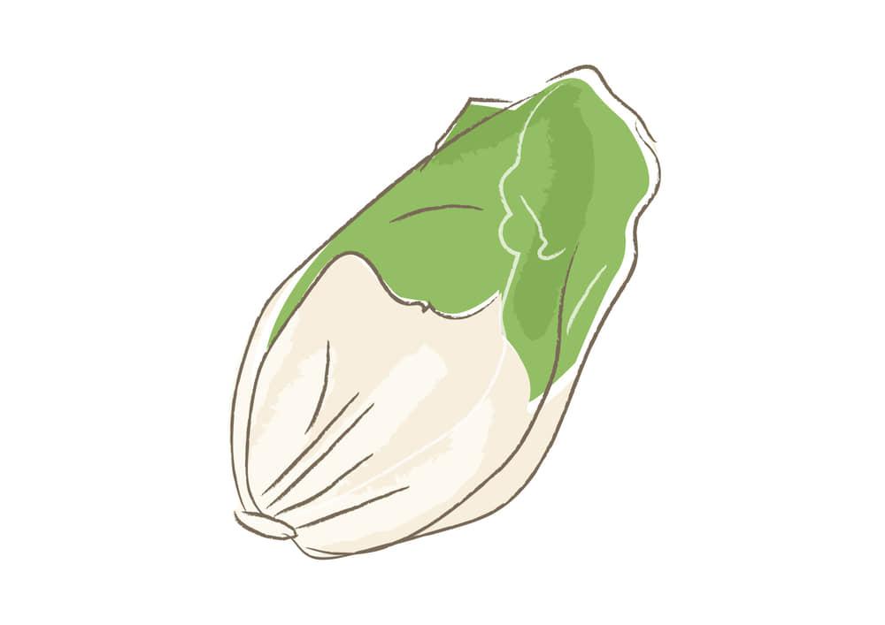 可愛いイラスト|野菜 ハクサイ