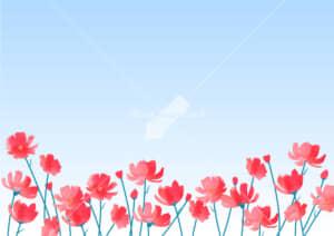 可愛いイラスト|コスモス 花畑 赤色 空 背景