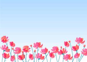 可愛いイラスト無料|コスモス 花畑 ピンク色 空 背景