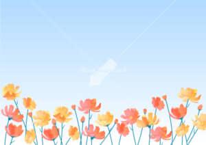 可愛いイラスト|コスモス 花畑 黄色 空 背景