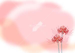 可愛いイラスト|彼岸花 赤色 背景