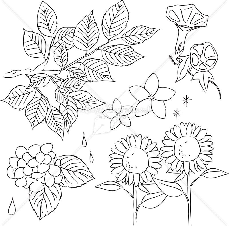 イラストデータ販売|新緑 夏 花 あしらい ペン画 手書き イラストデータ