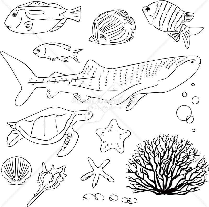 イラストデータ販売|海 魚 ジンベイザメ ウミガメ あしらい ペン画 手書き イラストデータ