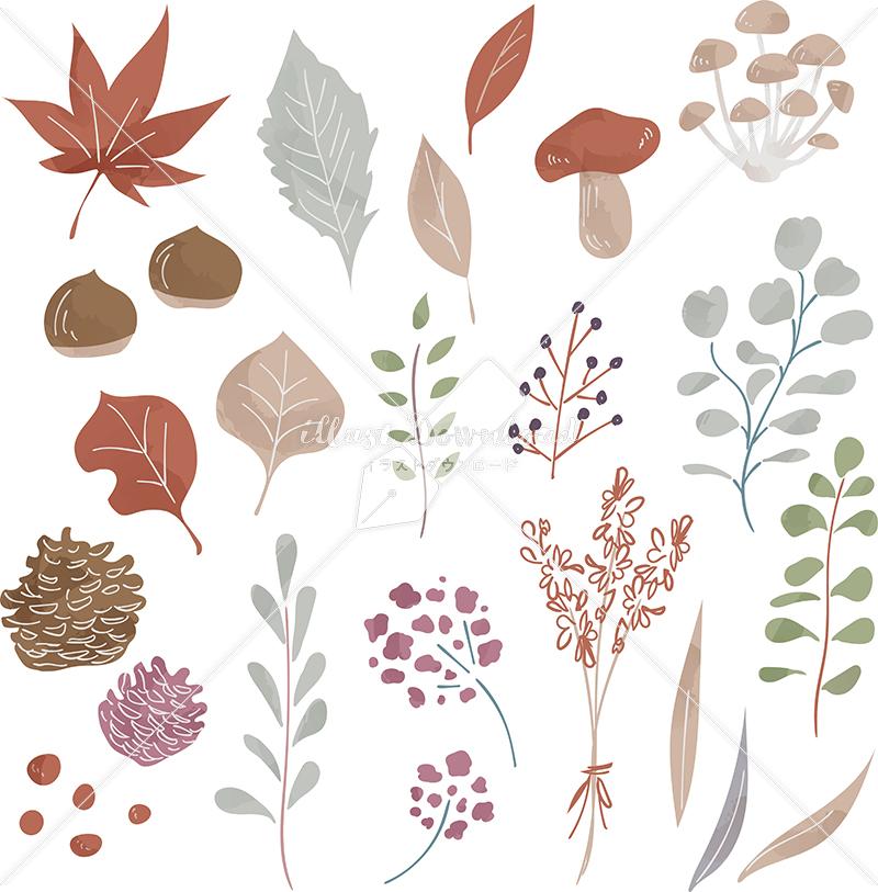 イラストデータ販売|秋 葉 自然 あしらい 色付き イラストデータ