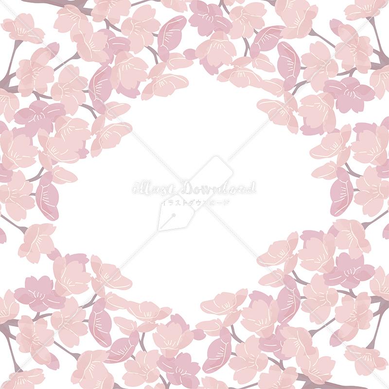 イラストデータ販売|桜 フレーム 満開 シンプル 手描き イラストデータ