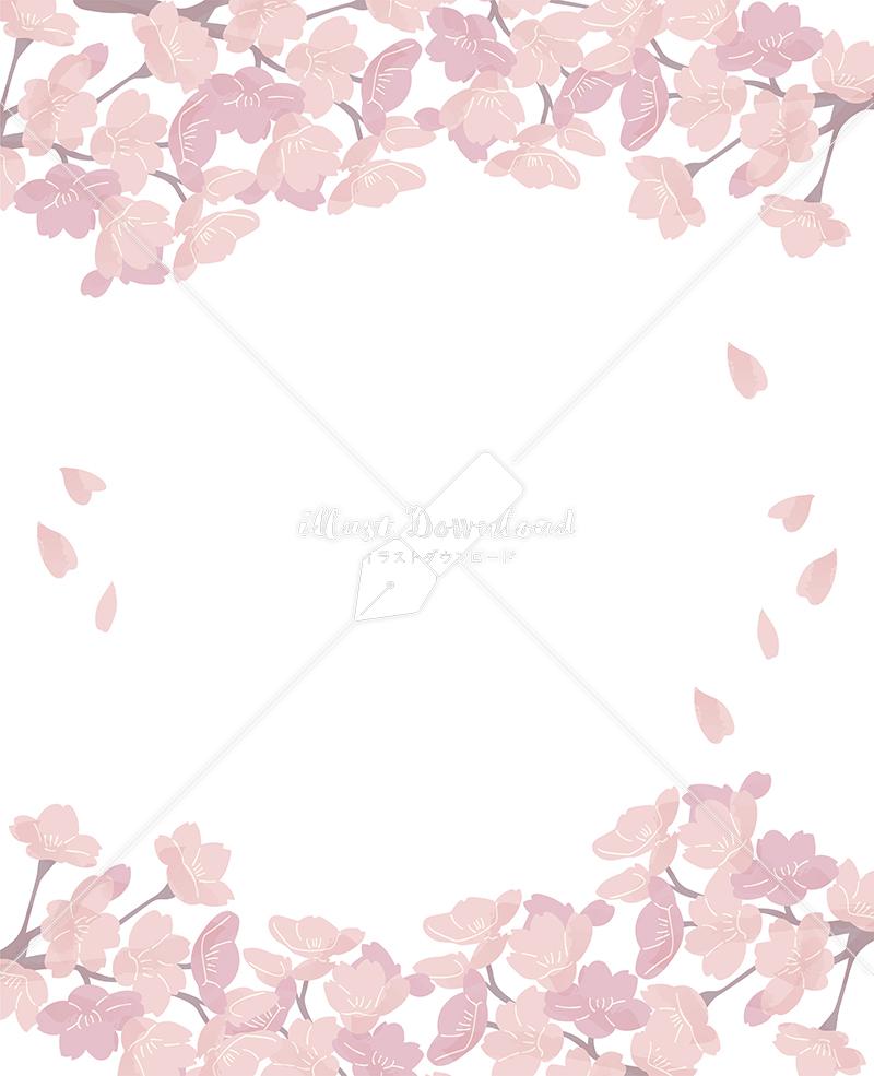イラストデータ販売 桜 フレーム 上下 満開 シンプル イラスト イラストデータ