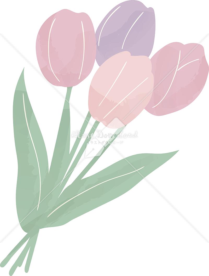 イラストデータ販売|春 チューリップ 花束 イラストデータ