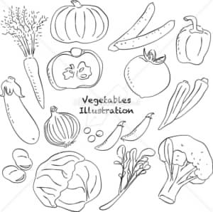 イラストデータ販売|野菜 あしらい ペン画 手書き イラストデータ