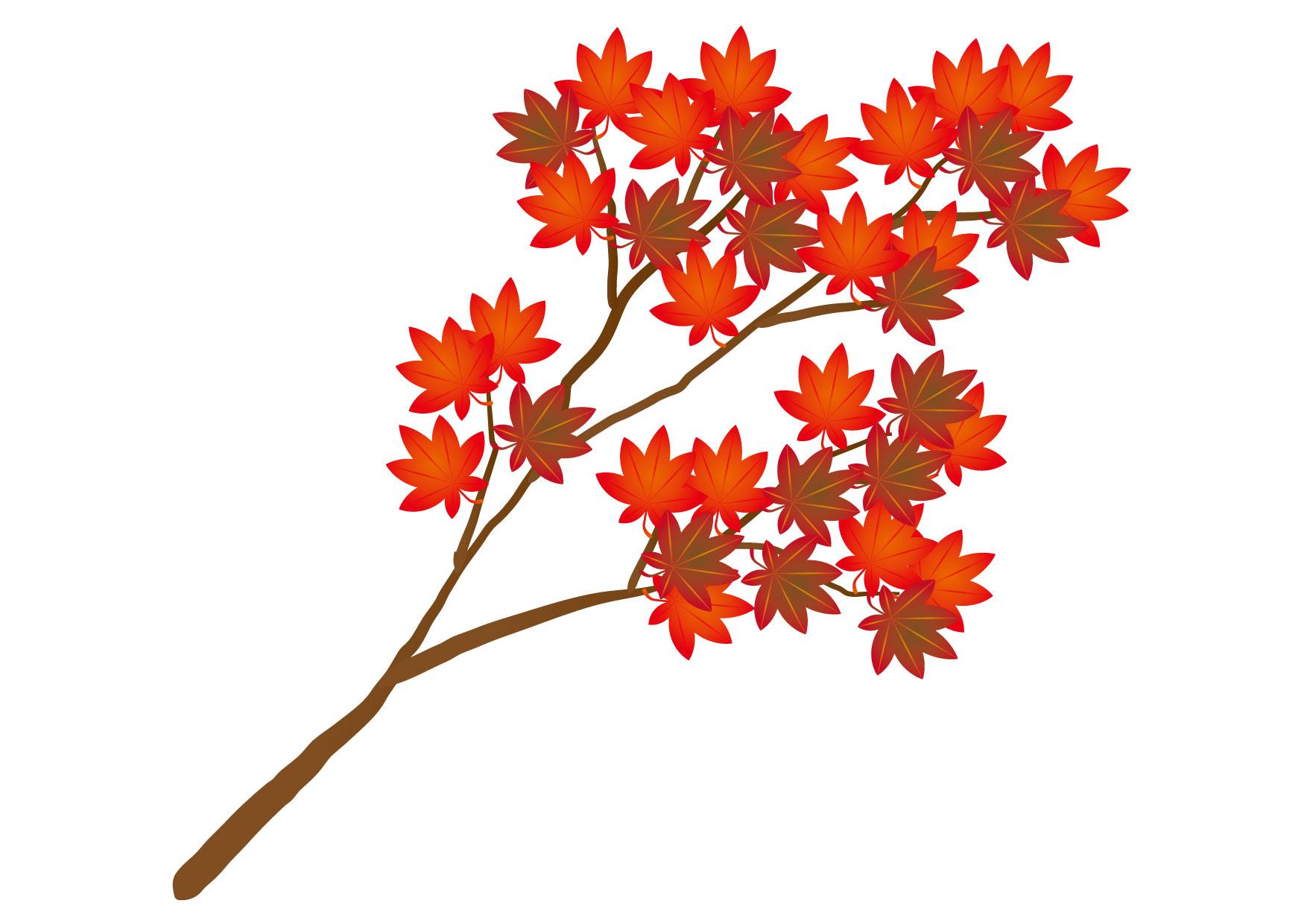 可愛いイラスト無料|もみじ 枝 赤色 − free illustration Maple branch red