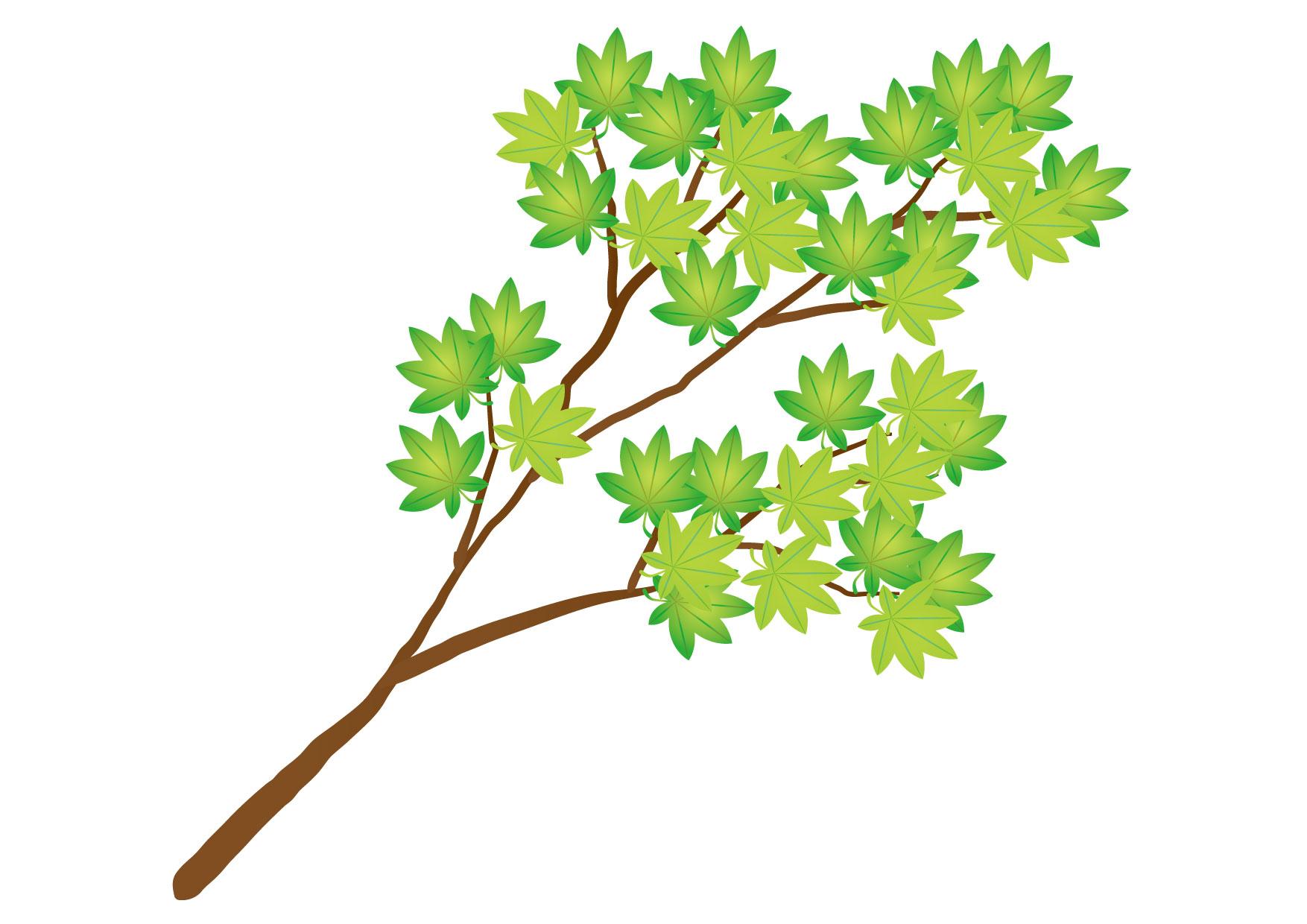 可愛いイラスト無料|もみじ 枝 緑色 − free illustration Maple branch green
