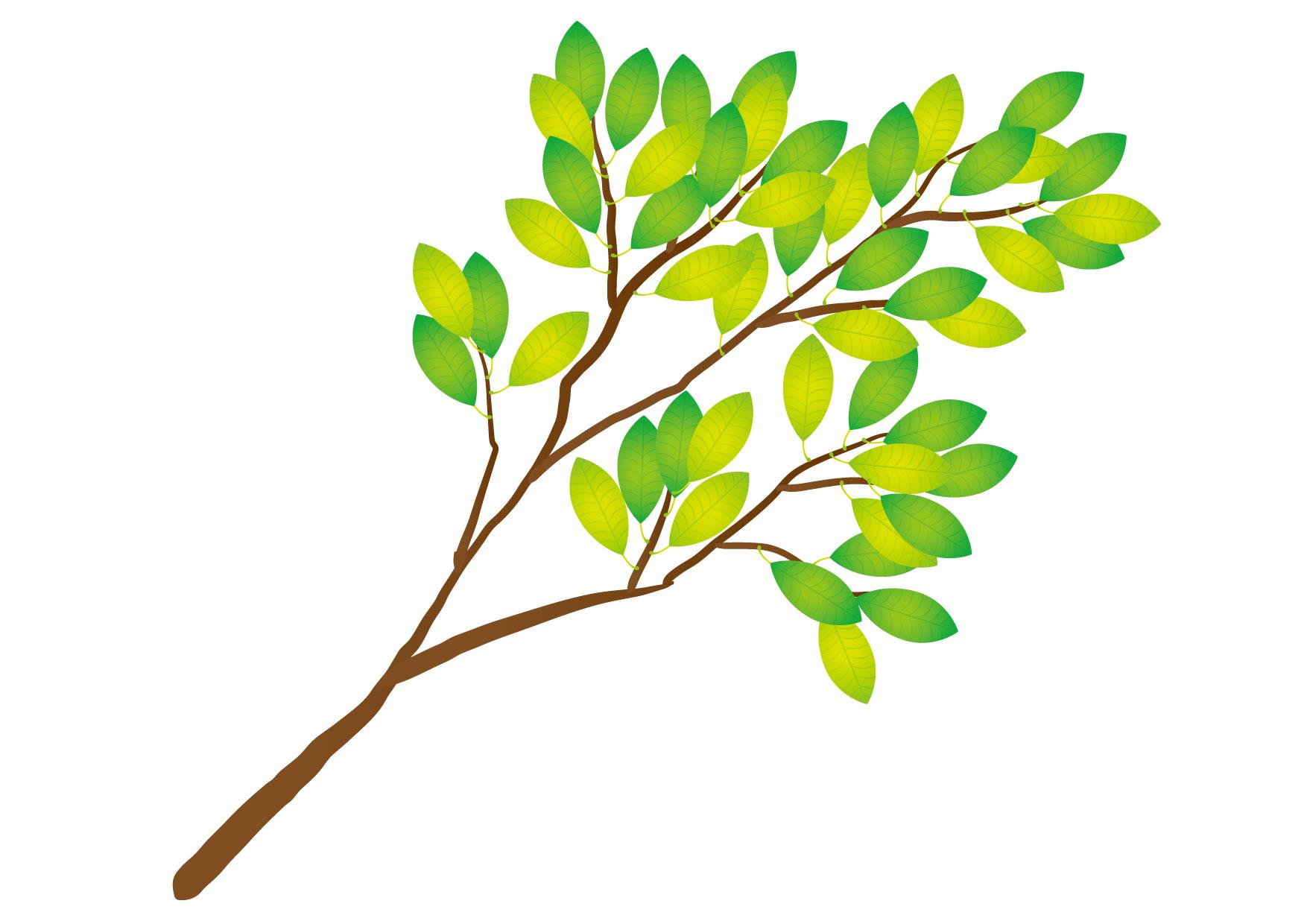 可愛いイラスト無料|木の枝 緑色 − free illustration Tree branch green