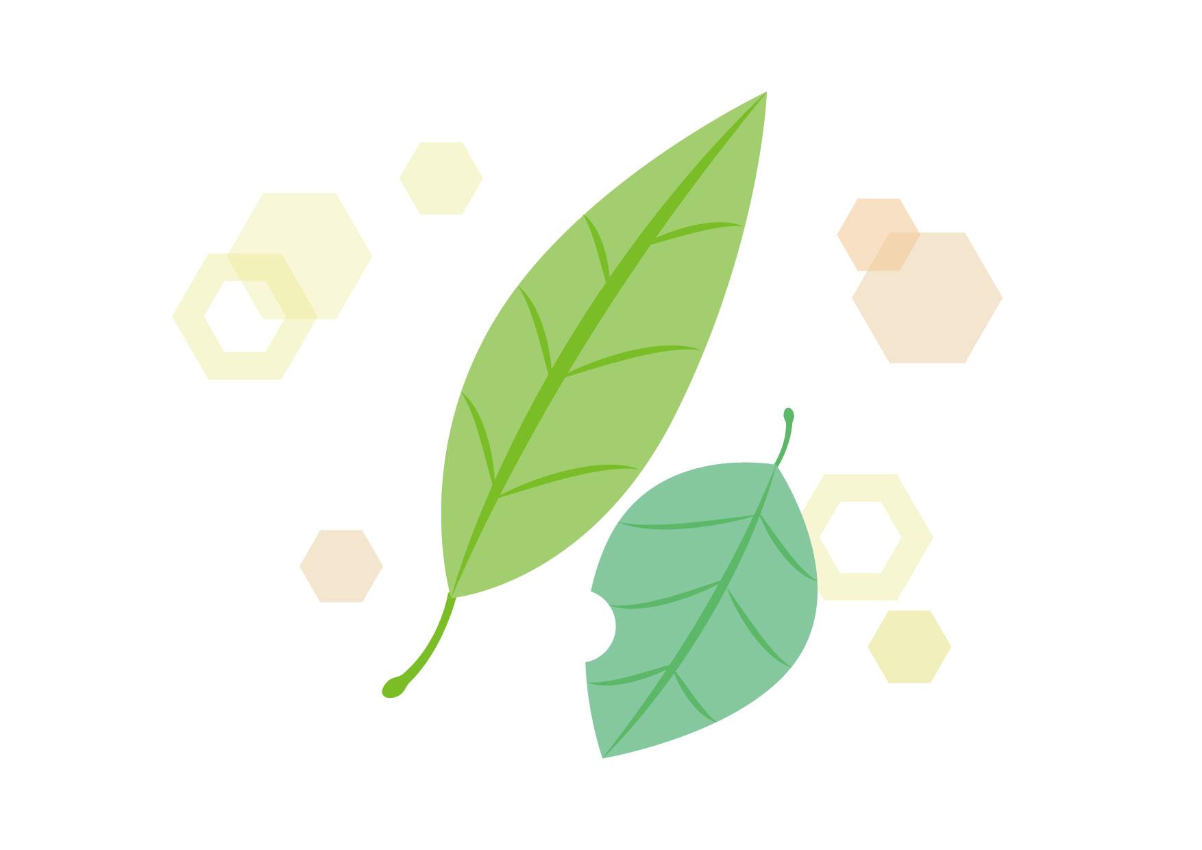 可愛いイラスト無料|落ち葉 緑 キラキラ − free illustration Fallen leaves green glitter