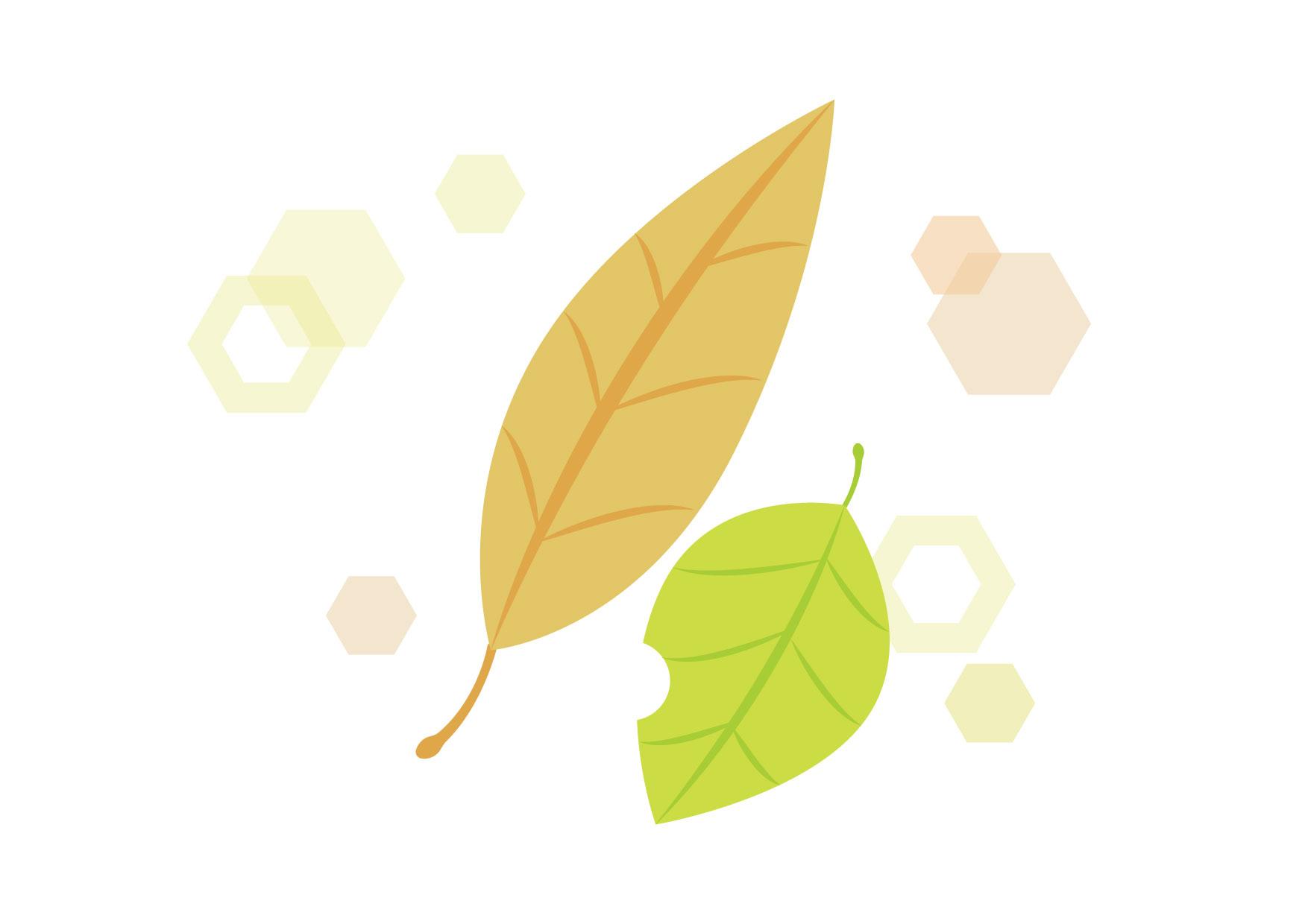 可愛いイラスト無料|落ち葉 黄色 キラキラ − free illustration Fallen leaves yellow glitter